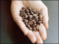 Hormones may tie caffeine to cancer risk