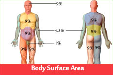 Body Surface Area, Body Mass Index
