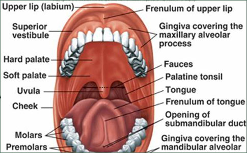 Cancer of the Oral Cavity - Introduction, Etiology and Pathology ...