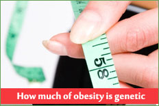 How much of obesity is genetic